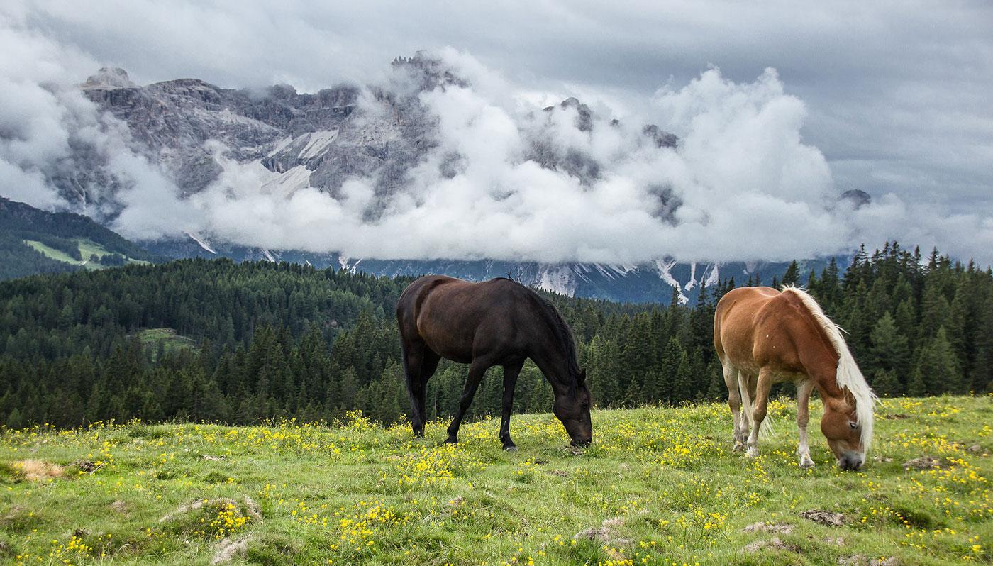berge Pferde
